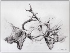 """Sparring Elk"", 9 x 12', pencil"