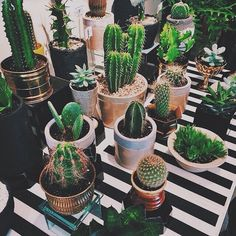 a little cactus garden Deco Cactus, Cactus Decor, Cacti And Succulents, Planting Succulents, Planting Flowers, Cactus Plante, Plant Aesthetic, Plants Are Friends, Cactus Y Suculentas