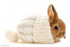 Bunny :)
