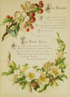 The Artistic language of flowers Published 1888