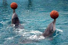 DE TODO UN POCO: India prohíbe los espectáculos de delfines y los d...