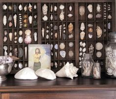 Love this display of shells. Use an old printer's tray to achieve this effect. V. Pretty
