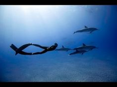 ▶ Freediving with Dolphins - YouTube