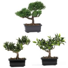 "8.5"" Bonsai Silk Plant Collection (Set of 3)"