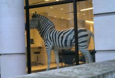 Zebra in an office near St Paul's.