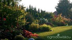 Mój ogrodowy pamiętnik - strona 804 - Forum ogrodnicze - Ogrodowisko Plants, Plant, Planets