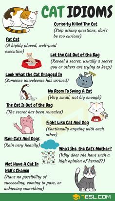 CAT Idioms: 30 Useful Cat Idioms & Sayings in English Cat Idioms & Cat Sayings! Learn common cat idioms, phrases and sayings in English with meaning, ESL printable worksheets and example sentences. English Vocabulary Words, English Phrases, Learn English Words, Learn English Grammar, English Quotes, English Vinglish, English Study, English Food, English Language Learning