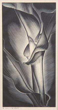 Paul Landacre (American, 1893-1963). Growing Corn. (wood engraving) Like his art... Love this. S
