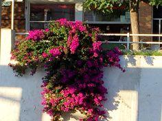 Train Station Sitges Sitges, Train Station, Barcelona, Spain, Flowers, Plants, Sevilla Spain, Barcelona Spain, Plant