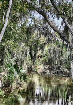 Beautiful bayou