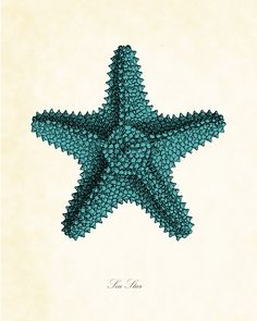 Vintage Sea Star Starfish in Aqua 8 x 10 Art Print Marin Vintage, Star Clipart, Coral Print, Coastal Style, Coastal Cottage, Coastal Living, Coastal Decor, Beach Art, Vintage Images