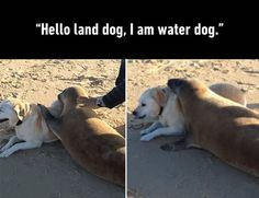 22 Funny Animal Pictures for Your Friday
