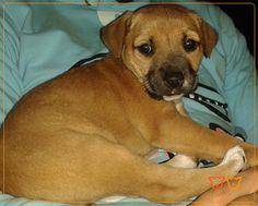 Sasha -  Registe-se também no nosso site e partilhe connosco a história e fotos do seu animal de companhia! www.veterinario24horas.pt