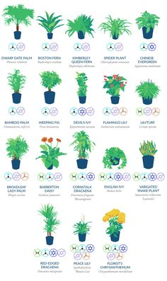indoor plants which are most effective at filtering these harmful toxins and pollutants from the air