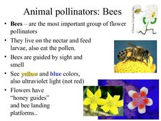 bees are the most important pollinators