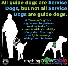 The service dogs exact job can vary. Therapy Dog Training, Therapy Dogs, Training Tips, Autism Service Dogs, Psychiatric Service Dog, Dogs With Jobs, Dogs Online, Emotional Support Animal, Military Dogs