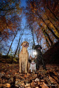 Dogs Goats, Animals, Good Photos, Dogs, Animales, Animaux, Animal Memes, Animal, Goat