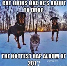Funny Cat Looks Like He's About To Drop The Hottest Rap Album Of The Year
