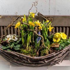 The trained eye sees spring! Easter Flower Arrangements, Easter Flowers, Spring Flowers, Silk Flowers, Floral Arrangements, Deco Floral, Arte Floral, Floral Design, Bradford Pear Tree