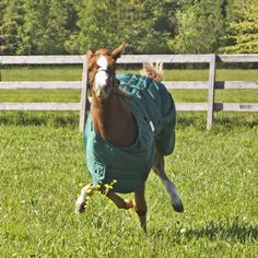 Run Forest run!! We were out taking foal blanket pictures and snapped this cute one!