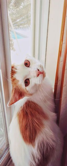 My little boy max - http://cutecatshq.com/cats/my-little-boy-max/
