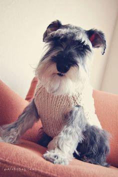 Just like my moodgie! - Rocket by Melissa Heard #Miniature #Schnauzer