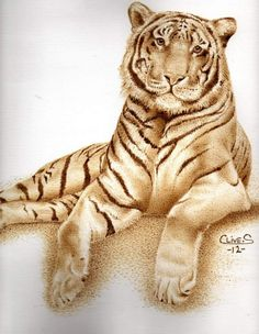Tiger pyrography on paper Clive Smith