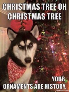 Do My Pets Really Need Vaccines? - Funny Husky Meme - Funny Husky Quote - Do My Pets Really Need Vaccines? Funny Husky Meme Funny Husky Quote Photos drôles de chien de Noël Dogs The post Do My Pets Really Need Vaccines? appeared first on Gag Dad. Husky Humor, Husky Quotes, Funny Husky Meme, Dog Quotes Funny, Funny Animal Memes, Funny Animal Pictures, Dog Pictures, Funny Animals, Cute Animals