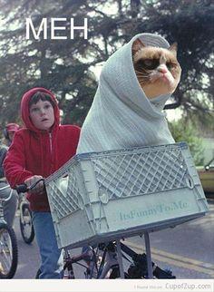 grumpy cat, rides in ET bike