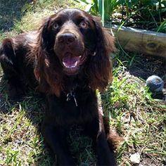 Pet Owner(s): Khris England Pet: Rueger (Boykin Spaniel)