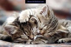 A good day to sleep in #cat humor | Tumblr