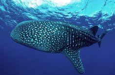 Gute Tauch-Alternativen: Similan Islands oder Great Barrier Reef: Es gibt Tauchplätze, die einen großen Namen haben - und die Erwartungen doch nicht erfüllen. Auf diese fünf angeblichen Traumziele können Sie 2015 wirklich verzichten.