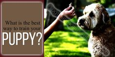How To Train Your Dog , Dog Training in Home, Dog Training History, Dog Training Books , Dog Training and Dog Training methods Dog Training Books, Dog Training Methods, Basic Dog Training, Training Your Puppy, Puppies, Dogs, Animals, Cubs, Animales