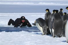 Filming emperor penguins on the ice. The penguins loved the camera! ©Chadden Hunter 'Frozen Planet' #FrozenPlanet #Ice #Penguins