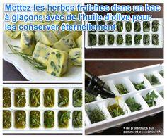 Enfin une Astuce Pour Conserver les Herbes Fraîches Éternellement.