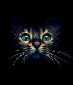 Tierfotografie | Stimmungsvolle Aufnahme und tolle Farbabstimmung. #Tierfotografie