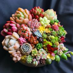 Image may contain: food Succulents In Containers, Cacti And Succulents, Planting Succulents, Planting Flowers, Succulent Gardening, Succulent Care, Container Gardening, Ginger Plant, Fairy Garden Plants