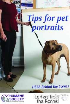 Ever wonder how HSSA's photographer Andrea Mitchell takes photos of shelter pets? Look at these tips for how to photograph pets! Behind the scenes with the dogs and cats of the Humane Society of Southern Arizona