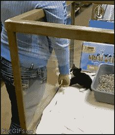 I have selected my human. We can now leave this place. Human sign the required…