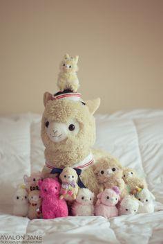some lovely alpacasso Alpacas, Cute Alpaca, Llama Alpaca, Cute Stuffed Animals, Cute Baby Animals, Alpaca Peluche, Cute Plush, Cute Toys, Doll Toys