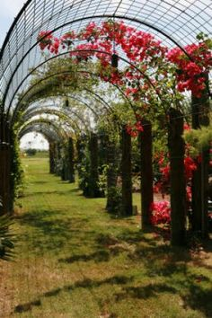 Landscape architect Mark McKinnon created a 65-foot tunnel arbor, or pergola, to connect the house and pool in this Galveston garden. Bougainvillea grows over it. Photo: Jill Hunter, For The Chronicle / HC