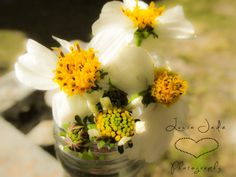 Beggars Tick is a plant that produces white flowers that attract bees and butterflies. These flowers belong to the daisy family and are one of