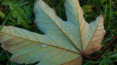 #nature Plant Leaves, Nature, Plants, Garden, Garten, Naturaleza, Planters, Gardening, The Great Outdoors