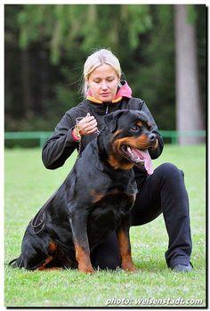 WORLD BEST Rottweiler .jpg (486×720)