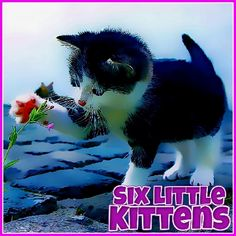Fun Math Games, Games To Play, Online Pc Games, Game & Watch, Little Kittens, Games For Girls, Jigsaw Puzzles, Animal Puzzle, Kitty