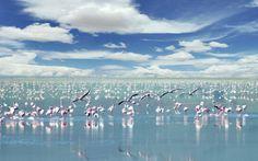 Lake Natron (flamingo lake) Singida. Tanzania