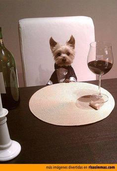 Perrito todo un gentleman.... QUIERO UNA MASCOTAAAAAA!!!!