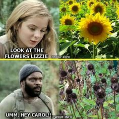 Look At The Flowers