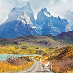Photographic Print: Majestic Peaks of Los Kuernos over Lake Pehoe. on a Dirt Road is worth Guanaco - Lama. the National by kavram : Backpacking South America, Backpacking Europe, South America Travel, Ushuaia, Best Places To Camp, Cool Places To Visit, Bolivia, Patagonia, Peninsula Valdes