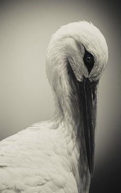 stork looking down